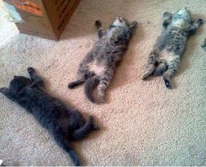 Kittens on the ground